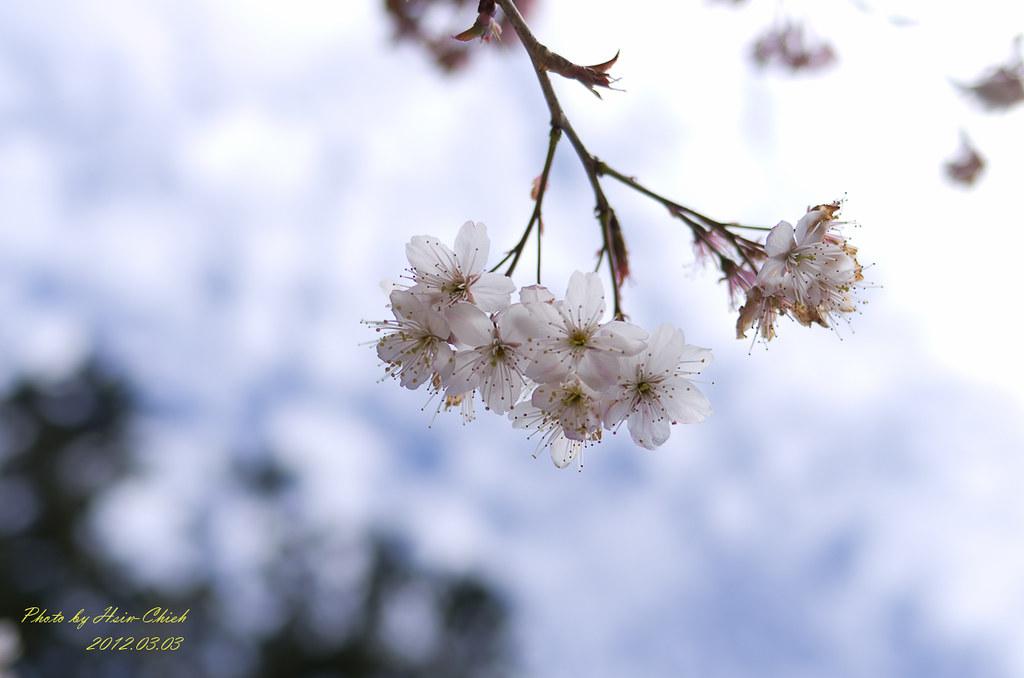 20120303-阿里山一日行腳(1)