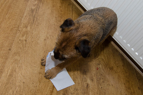 Bella Tries to Eat Mail