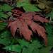 halil sezai'nin sonbaharı .. by ''nur''un dünyası