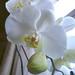 20120310_orkideak eta landareak-3