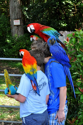 kids w/ tropical birds