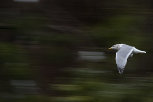 A week of panning #4: Fast flight - 無料写真検索fotoq