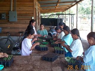 Remplissage des plateaux - Verapaces, Guatemala (2001)