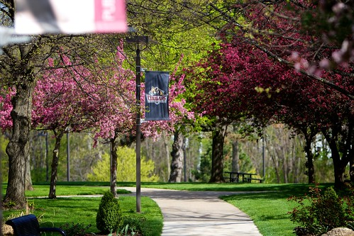 Spring colors on campus