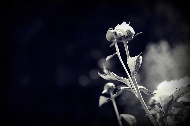 ööööööööööööööhihitooööäöähellm1801