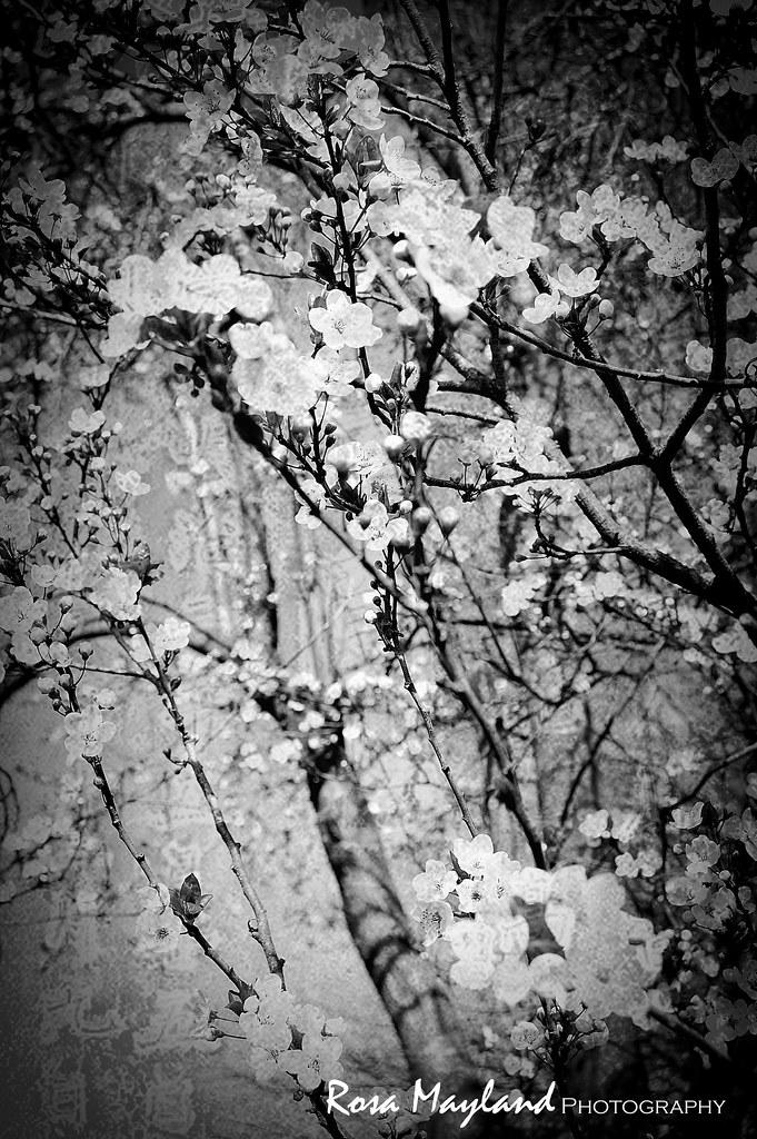 Spring Flowers 6 11 bis