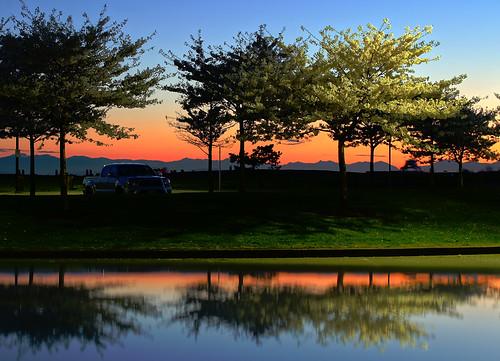 Cherry Blossoms at Sunset in Steveston's Garry Point Park
