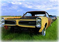 stock car racing(0.0), convertible(0.0), automobile(1.0), automotive exterior(1.0), vehicle(1.0), automotive design(1.0), antique car(1.0), classic car(1.0), land vehicle(1.0), luxury vehicle(1.0), muscle car(1.0), pontiac gto(1.0),