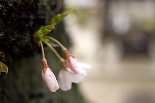 One scene in Kanon-ji Temple(Toyokawainari Osaka Betsuin),No.2.