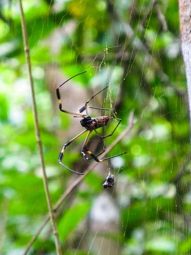 Parc National de Cahuita: une araignée. Beurk !