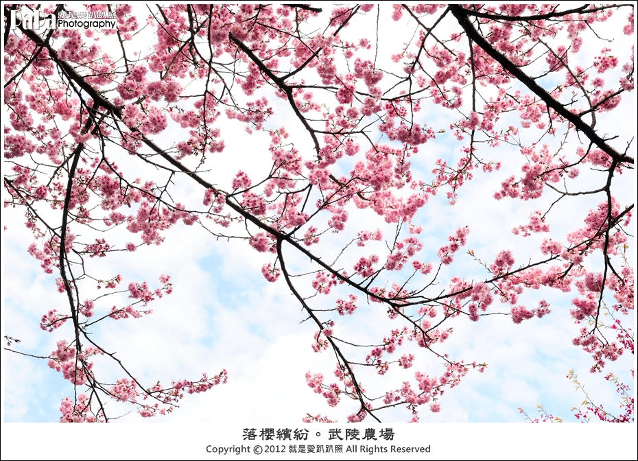 Wuling_0004