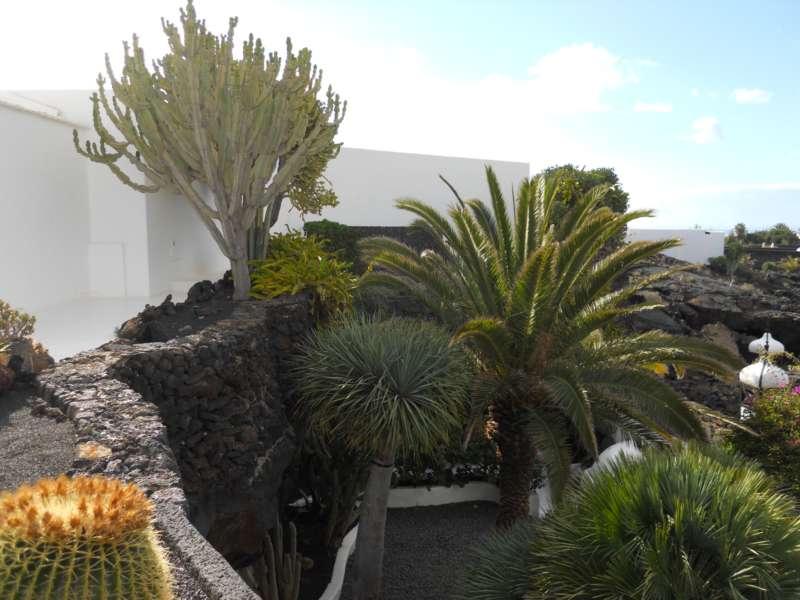 Alrededores casa Cesar Manrique Lanzarote