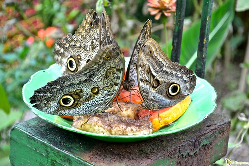 butterfly gardens arenal costa rica