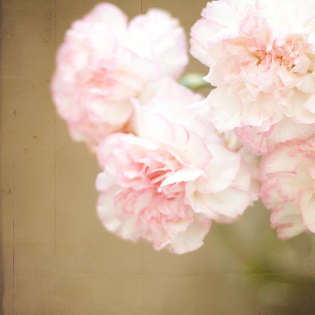 365: 206 Flowers