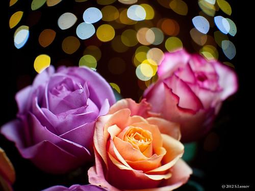 rose by S.Leonov
