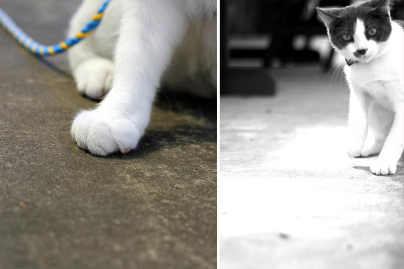 2012 10 March- Tobyblog011