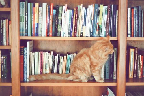 cat in books 2