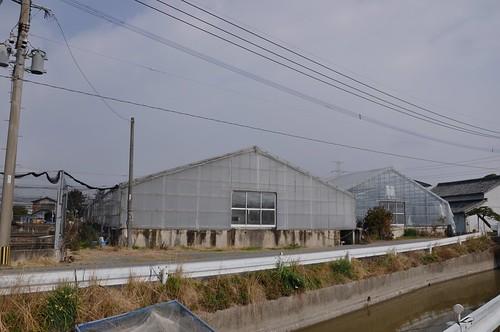 Okawa Nishikigoi Center
