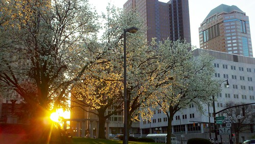 Bradford pears in bloom over the LeVeque Tower