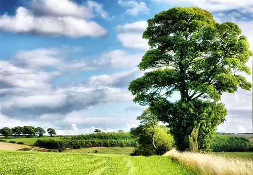 The Beauty of Trees. Thixendale,Yorkshire Wolds. UK.