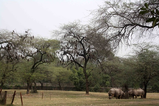 City Hangout – National Zoological Park, Mathura Road