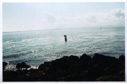 ProtoTour 2003 day 4 - Orca