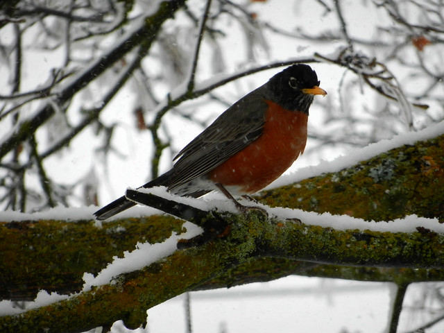 confused robin 2012