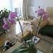 20120310_orkideak eta landareak-8