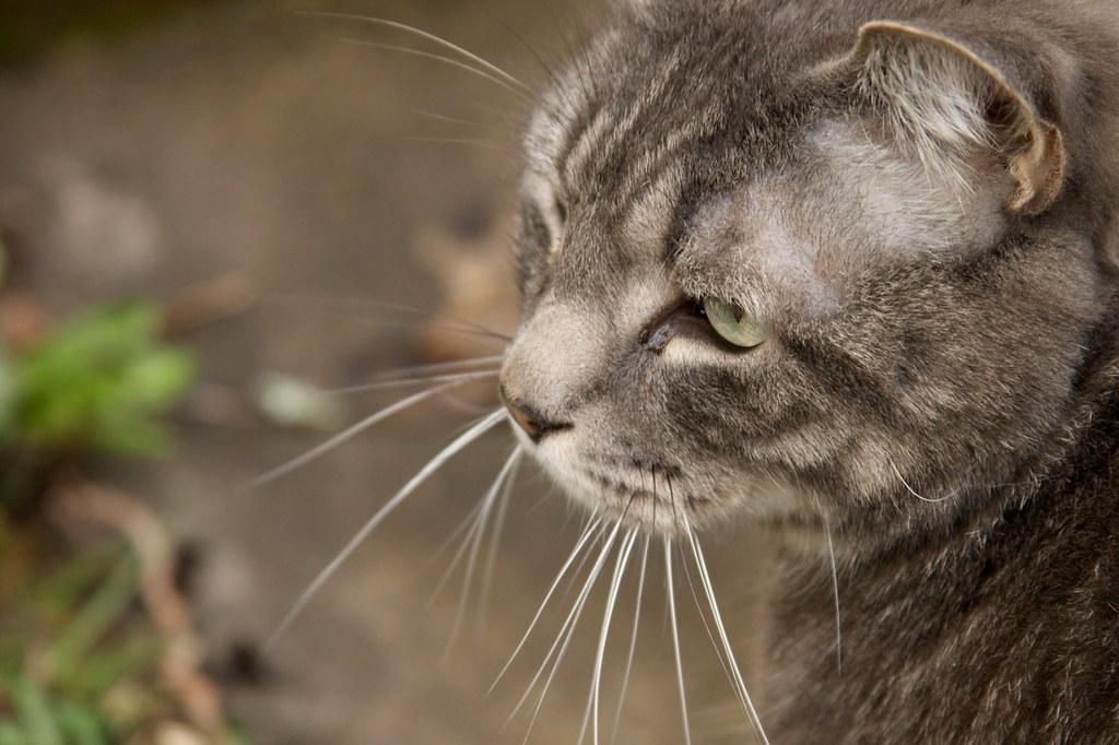 kitty  1321