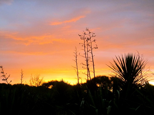 sunset flax