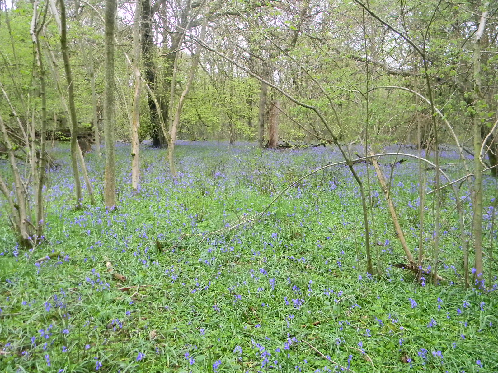 Bluebell diversion Guildford to Westhumble
