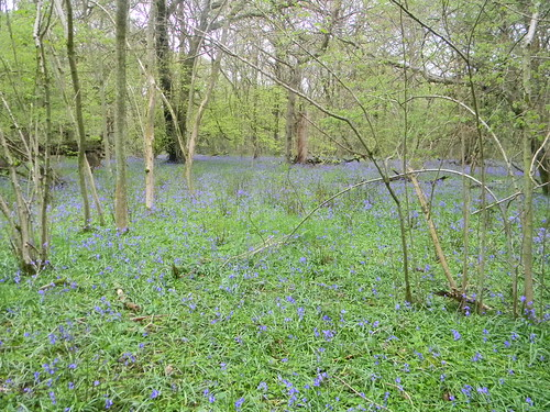 Bluebell diversion