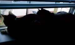Maggie and Huggy Bear in the window