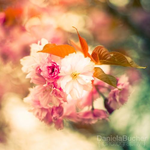 » blossom