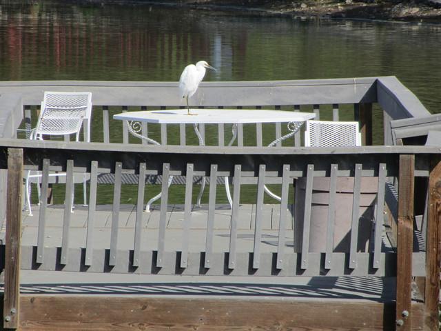 egret takes a break