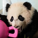 Bao Bao March 20, 2014 by Smithsonian's National Zoo
