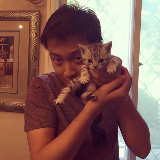 一个月的美短,何赛百味一个尺寸 #cat