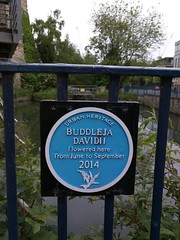 Photo of Blue plaque number 41415