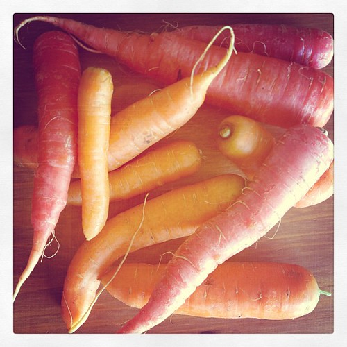 The MVP of this week's @JBGorganic CSA box, wild & gnarly carrots