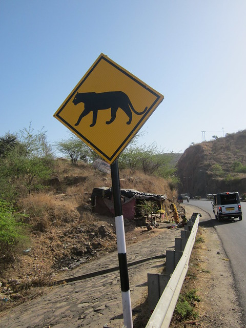 the Leopard Highway, Rajasthan