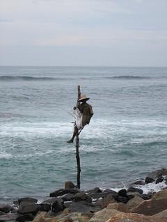 Midigama, stilt fisherman