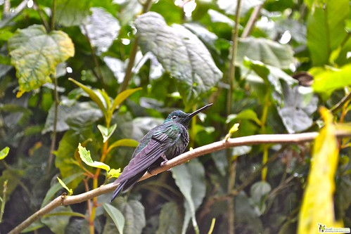 San Jose is the La Paz Waterfalls and Gardens hummingbird garden of costa rica