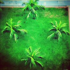 rainforest(0.0), flower(0.0), soil(0.0), cannabis(0.0), macro photography(0.0), forest(0.0), jungle(0.0), leaf(1.0), tree(1.0), plant(1.0), flora(1.0), green(1.0), vegetation(1.0),