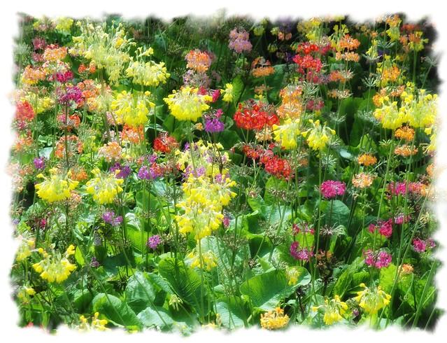 Wild Flower Bed Harlow Carr Gardens Explore Robin Denton