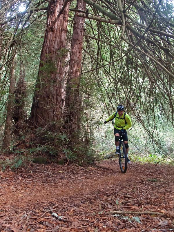 Ricardo on Big Trees
