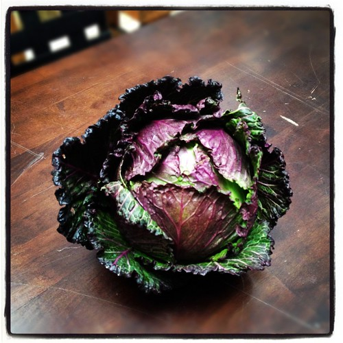 perfectcabbage by Nature Morte