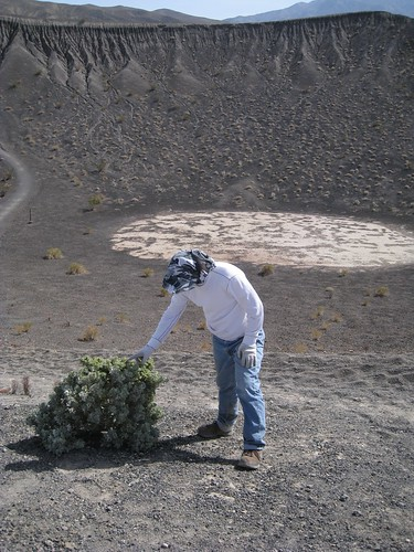 Garrett and the Desert Holly