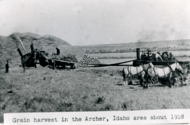 Archer Harvest