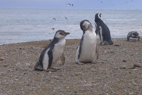 Punta Arenas-124
