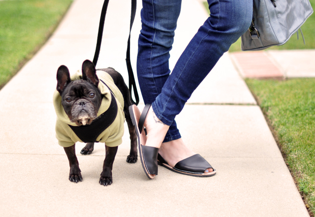 walking the dog-avarcas-frenchie-french bulldog